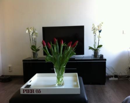 Beautiful cozy 1 bedroom flat photo 33192